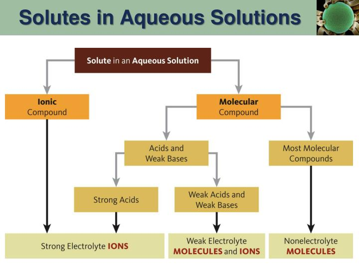 Solutes in Aqueous Solutions