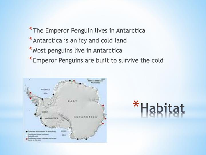The Emperor Penguin lives in Antarctica