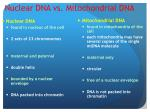 nuclear dna vs mitochondrial dna