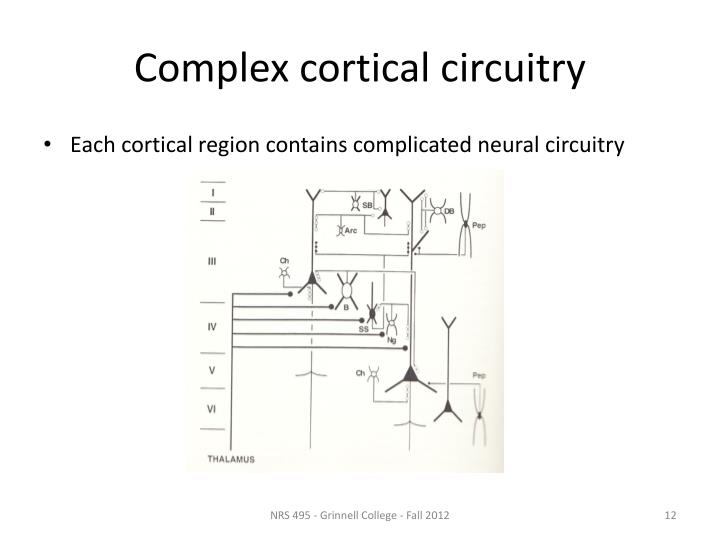 Complex cortical circuitry