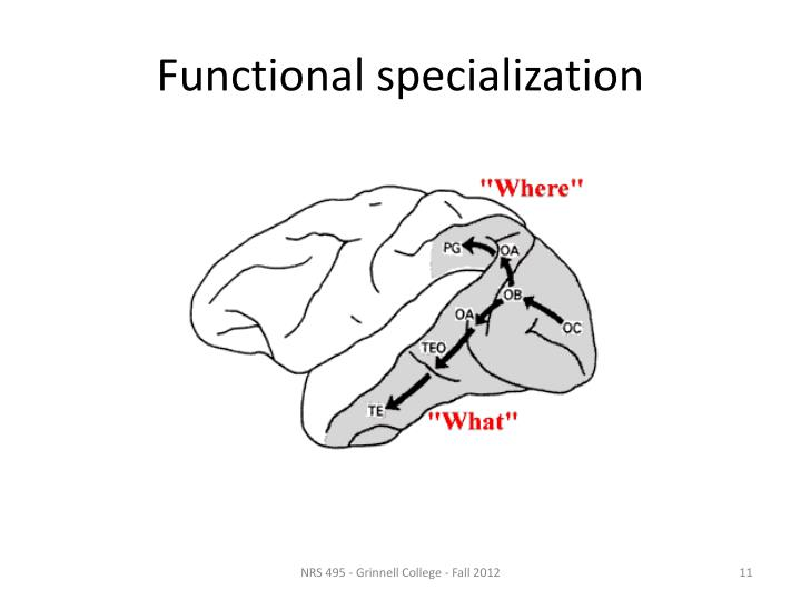 Functional specialization