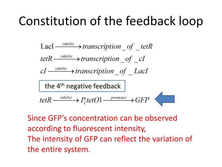 Constitution of the feedback loop