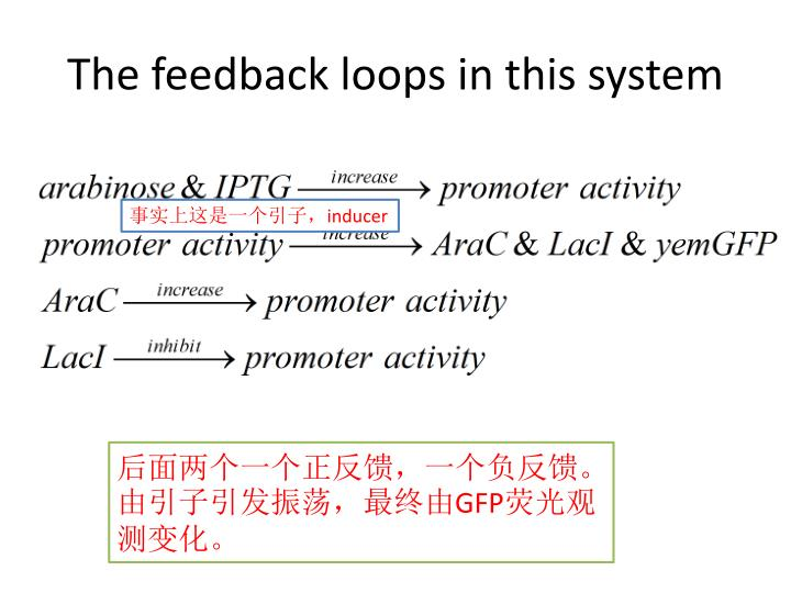 The feedback loops in this system