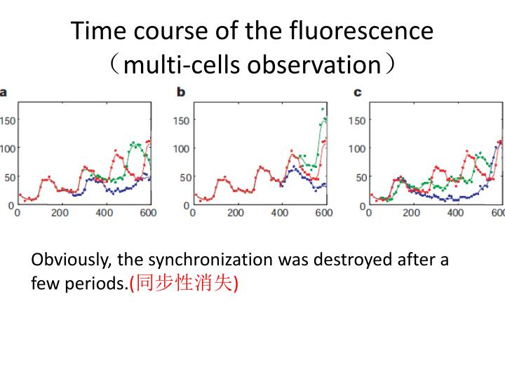 Time course of the fluorescence