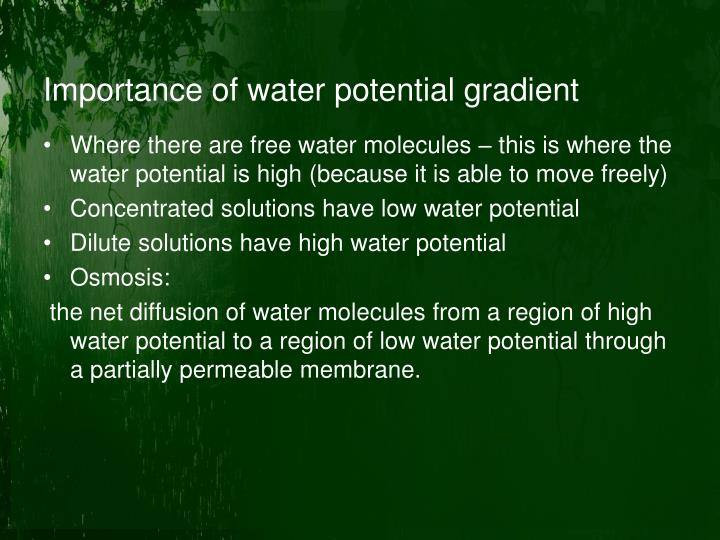 Importance of water potential gradient