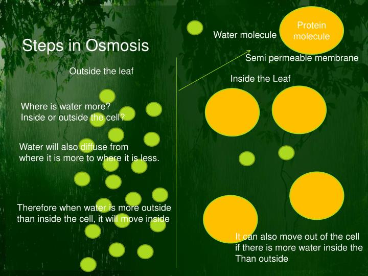 Steps in osmosis