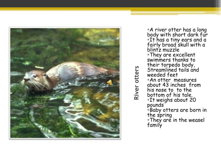 River otters1