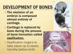development of bones