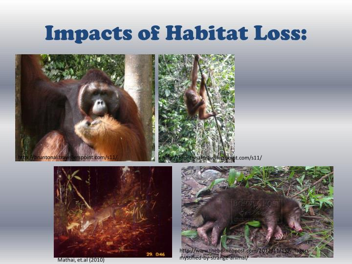Impacts of Habitat Loss: