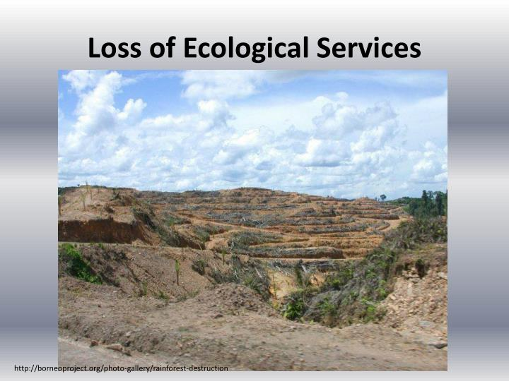 Loss of Ecological Services