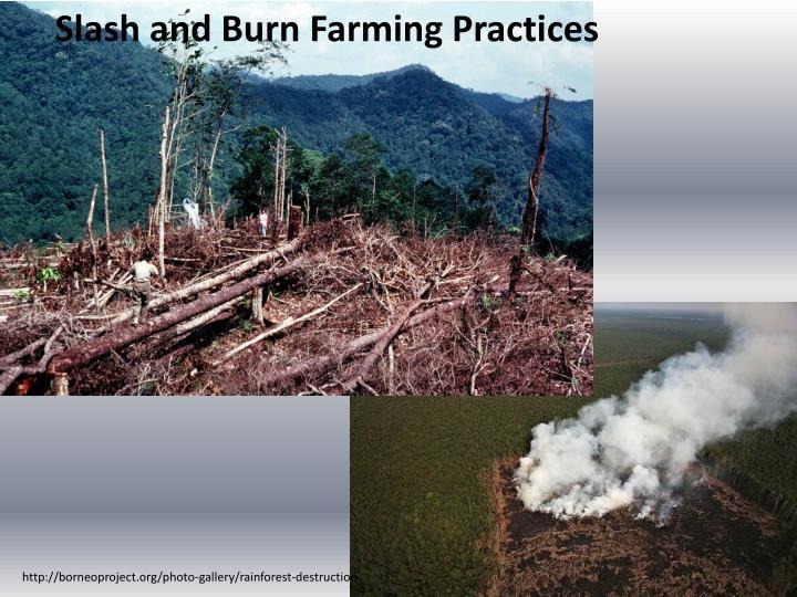 Slash and Burn Farming Practices