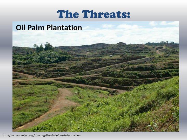 The Threats: