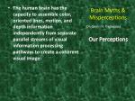 brain myths misperceptions17