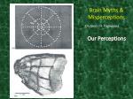 brain myths misperceptions19