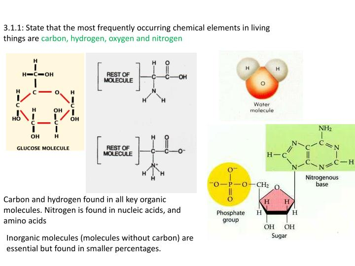 3.1.1: State that the most frequently occurring chemical elements in living