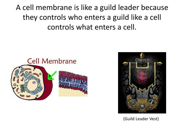 A cell membrane is like a guild leader because they controls who enters a guild like a cell controls what enters a cell.