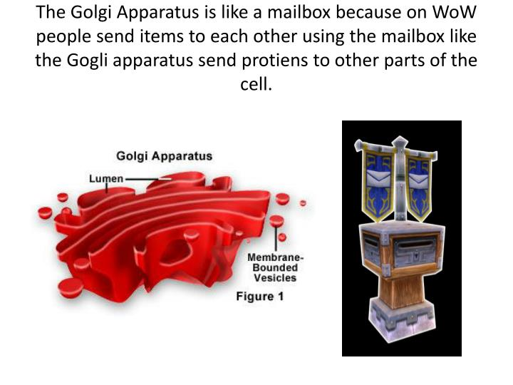 The Golgi Apparatus is like a mailbox because on