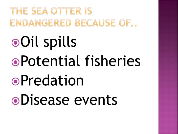 The Sea Otter is endangered because of..