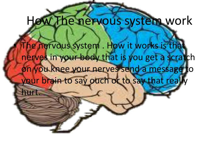 How The nervous system work