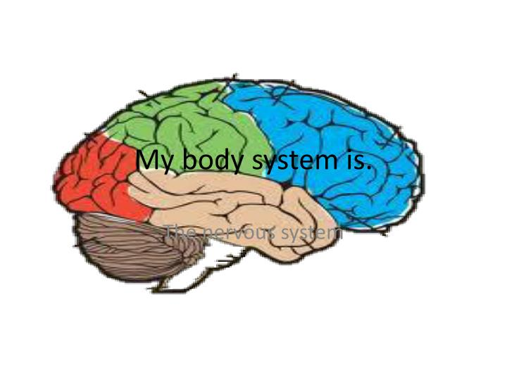 my body system is