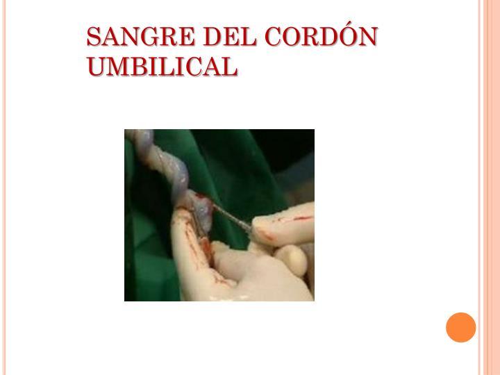 SANGRE DEL CORDÓN UMBILICAL