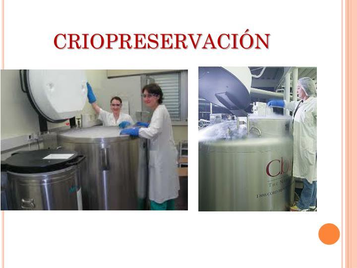 CRIOPRESERVACIÓN