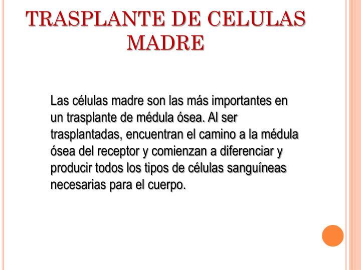 TRASPLANTE DE CELULAS MADRE