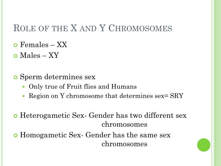 Role of the X and Y Chromosomes