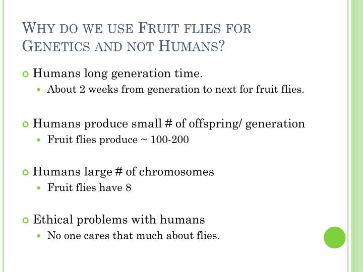 Why do we use Fruit flies for Genetics and not Humans?