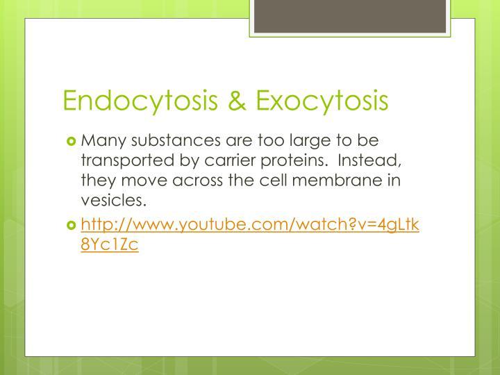 Endocytosis & Exocytosis