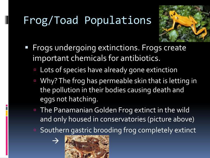 Frog/Toad Populations