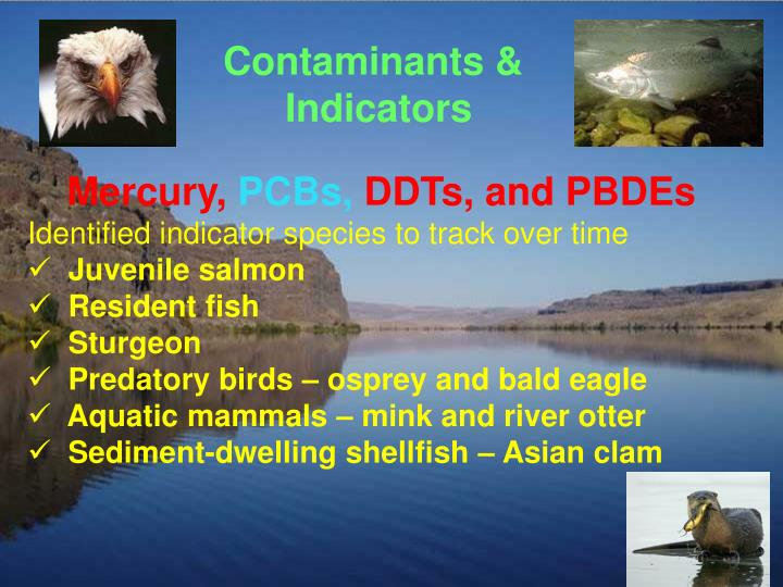 Contaminants &