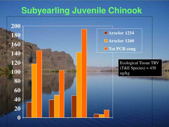 Subyearling Juvenile Chinook
