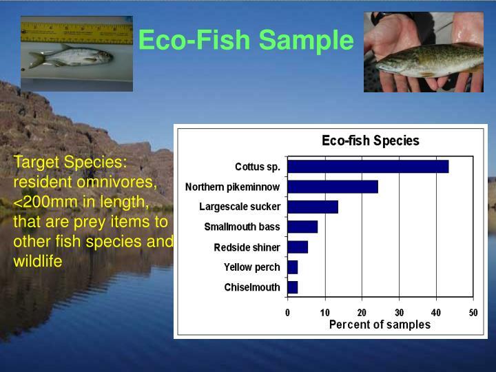 Eco-Fish Sample