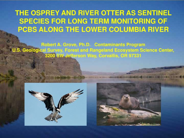 THE OSPREY AND RIVER OTTER AS SENTINEL