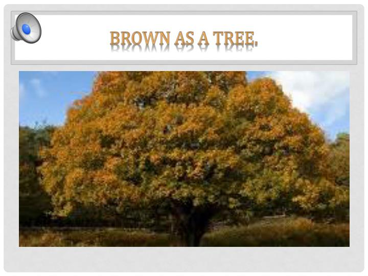 Brown as a tree