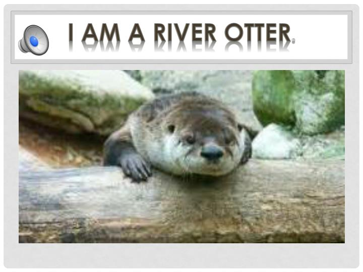 I am a River Otter