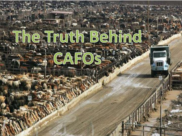 The Truth Behind CAFOs
