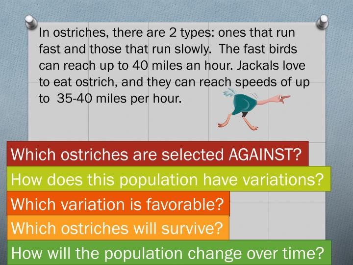 In ostriches, there are 2 types: ones that run fast and those