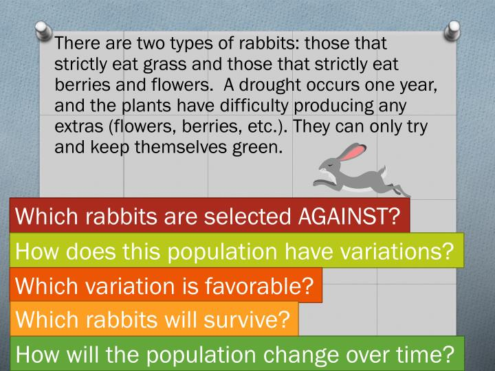 There are two types of rabbits: those that strictly eat grass and those