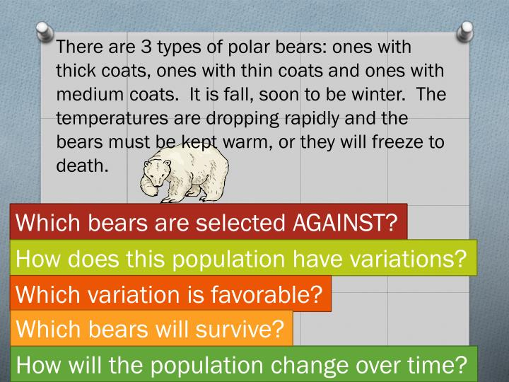 There are 3 types of polar bears: ones with thick coats, ones with thin