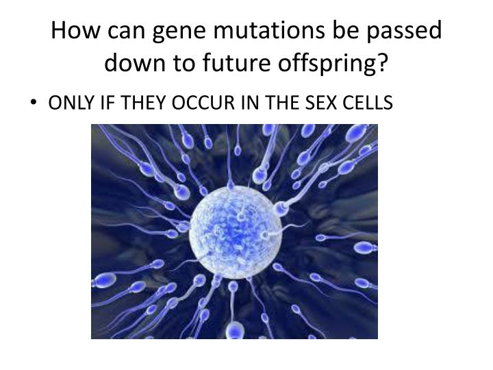 How can gene mutations be passed down to future offspring?