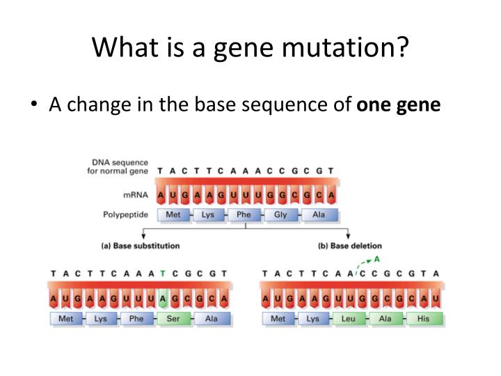 What is a gene mutation?