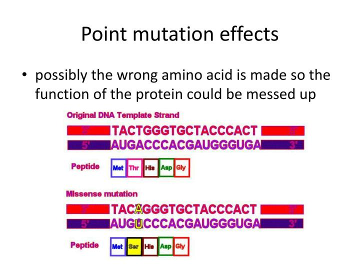 Point mutation effects