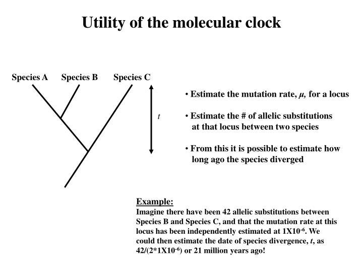 Utility of the molecular clock