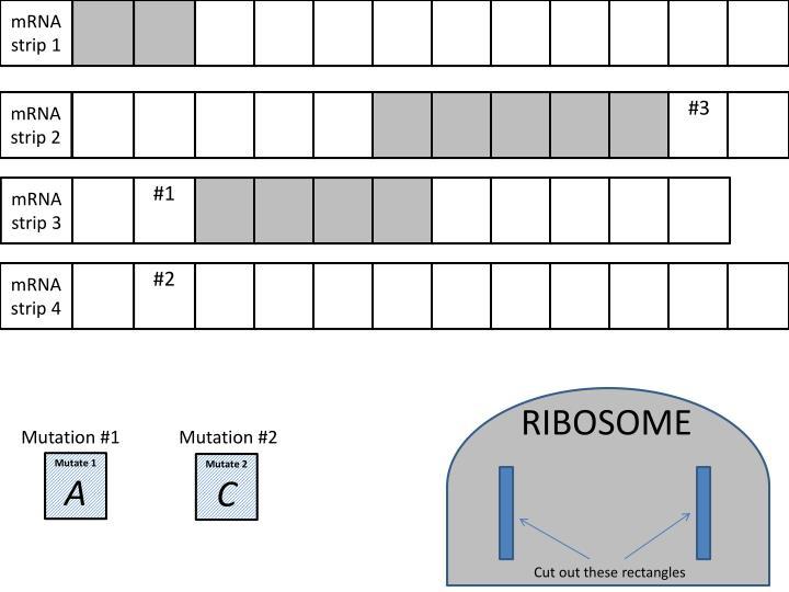 mRNA strip 1