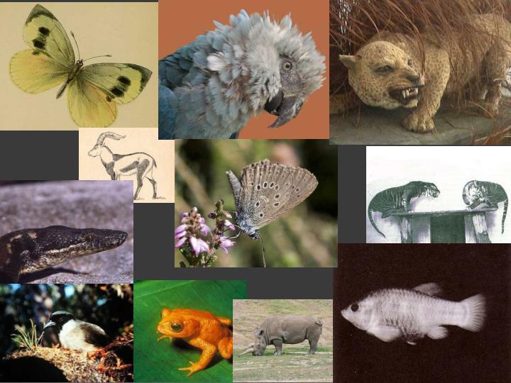 Extinct Animals in last 25 years