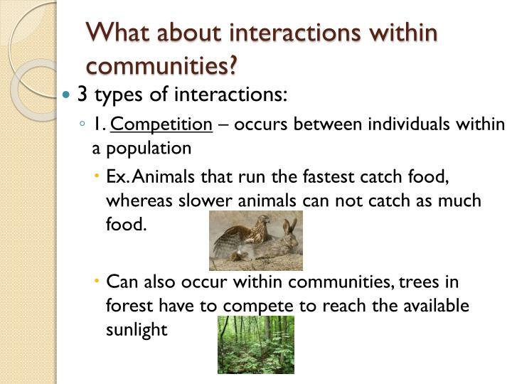 What about interactions within communities?