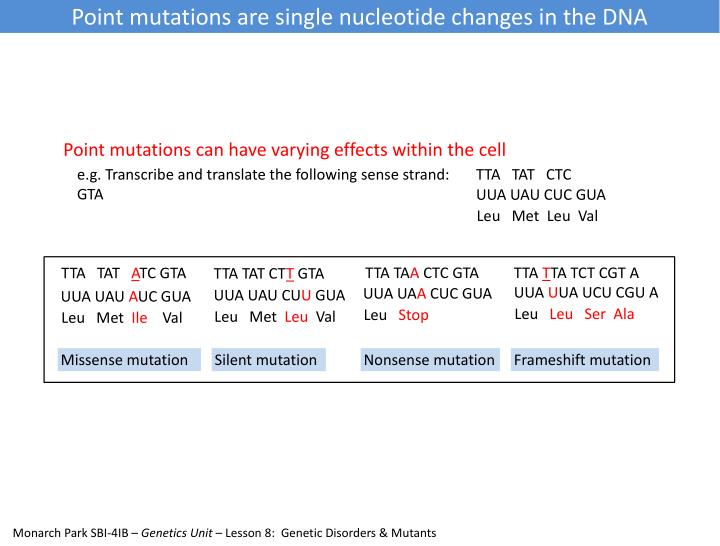 Point mutations are single nucleotide changes in the DNA