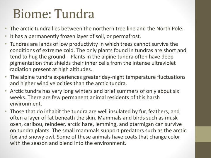 Biome: Tundra